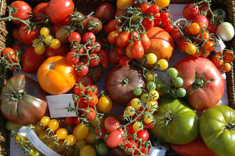 Le conservatoire national de la tomate ch teau h tel de la bourdaisi re - La bourdaisiere tomates ...